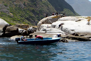 Hout Bay crayfish poachers operating in broad daylight